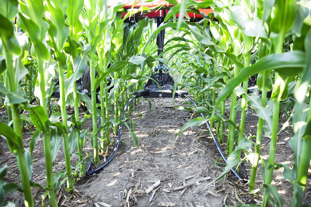 How Cover Crops Affect Your Fertilizer Strategy