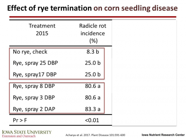 How to Protect Corn Yields Following Cereal Rye