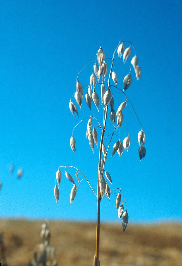 What Farmers Need to Know About Mycorrhizae