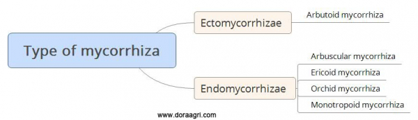 Why Mycorrhiza is important in Agriculture