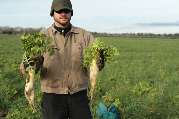 Prevented Planting? Cover Crops Offer a Silver Lining