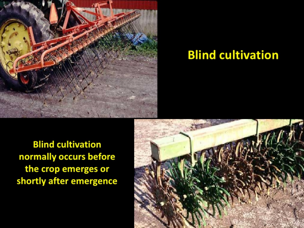 Weed Control in Organic Soybean Farms