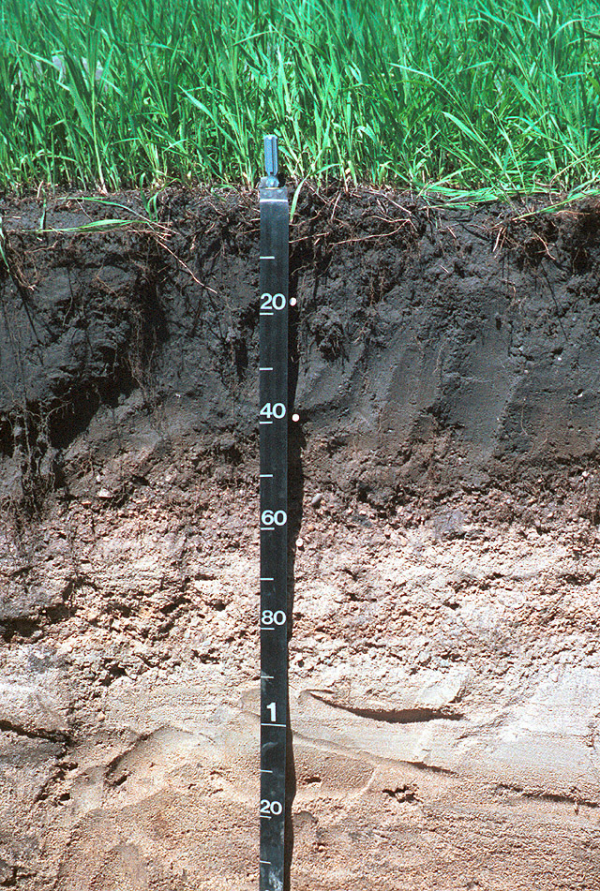 7 Ways to Measure Soil Health Improvements