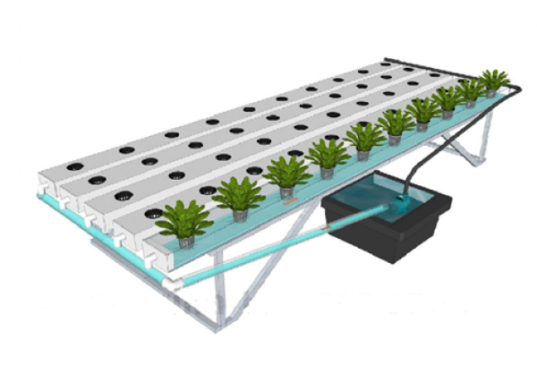 Hydroponics 101: A Basic Guide to Start Soilless Cultivation